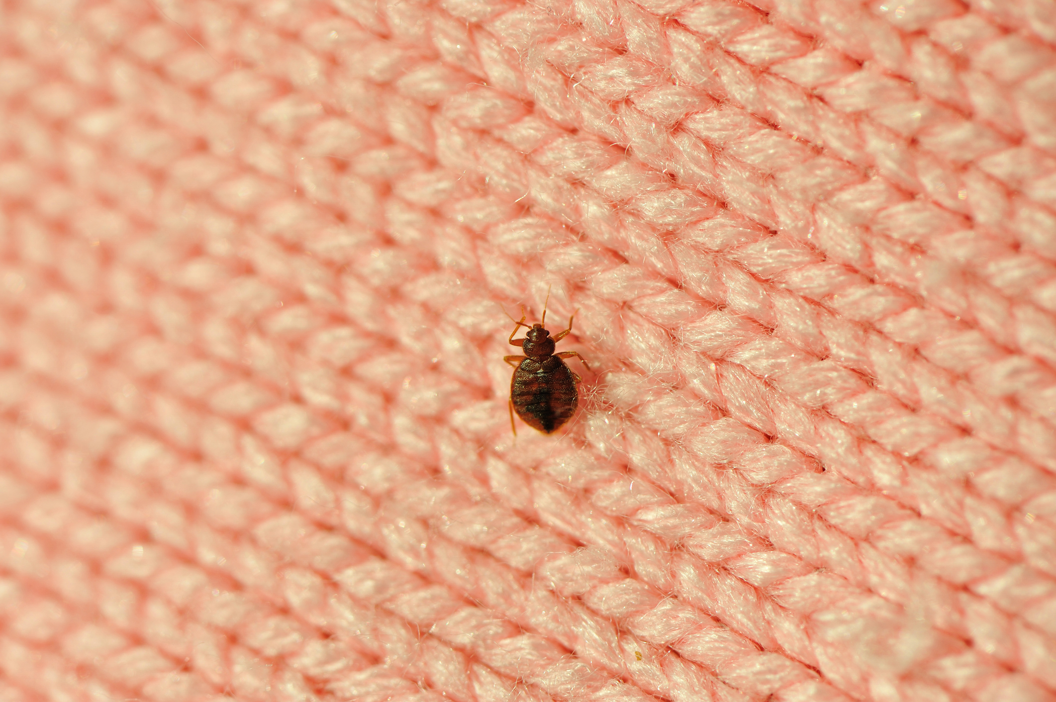 My Landlord Didn T Tell Me My Building Recently Had Bed Bugs What Can I Do