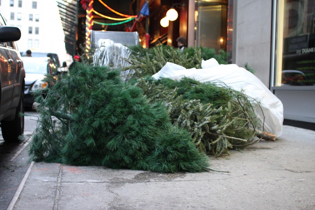 How to properly dispose of your NYC Christmas tree once the holidays are  over - How To Properly Dispose Of Your NYC Christmas Tree Once The Holidays