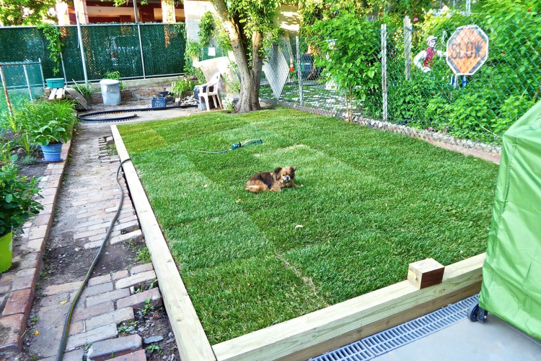 5 Steps For Installing A Lawn In Your Brownstone S Backyard