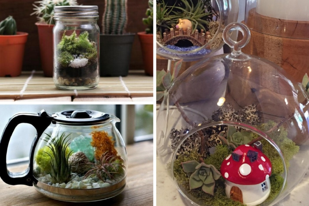 5 Reasons You Need A Terrarium In Your Life And Apartment Asap