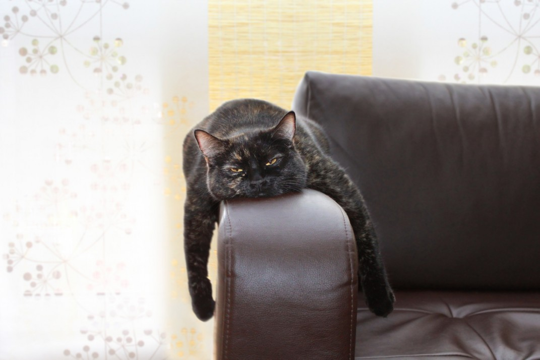 Image result for bored cat on couch