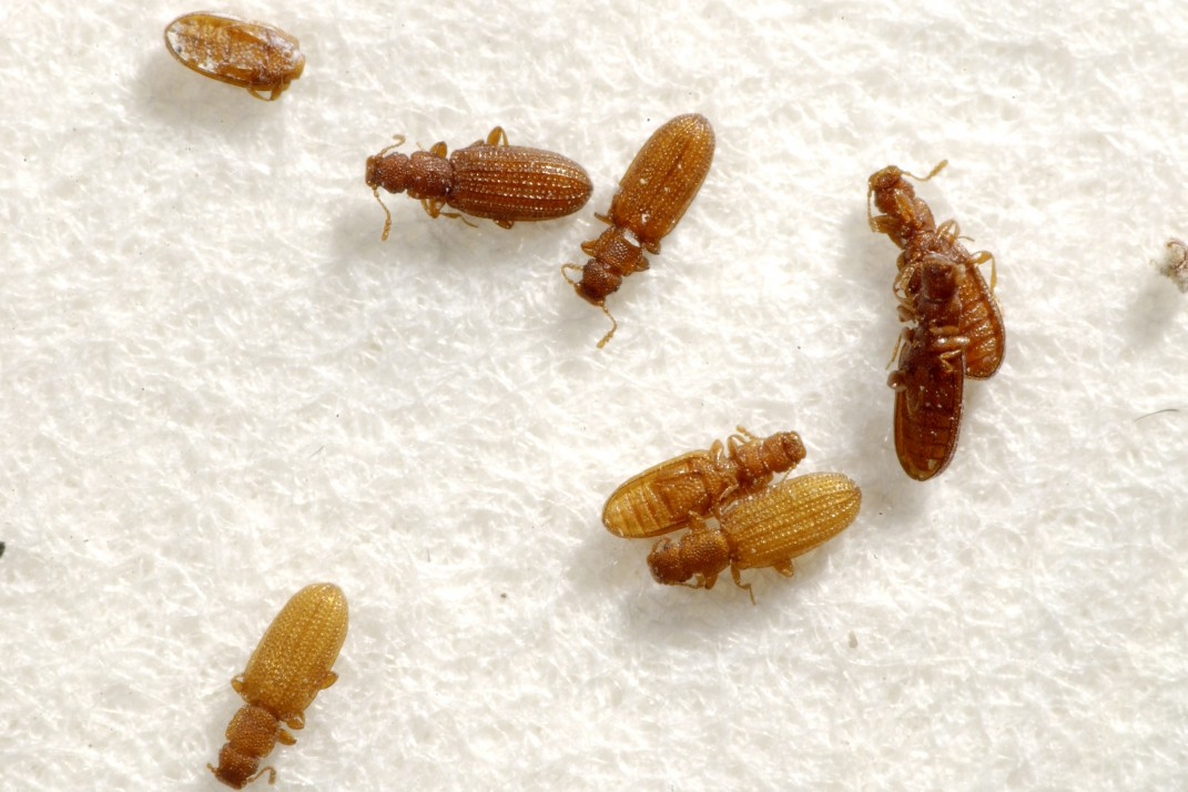 15 Bugs That Arent Bed Bugs